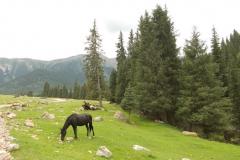 na górskiej polance: konie, kutry i turyści wysypujący się z samochodów