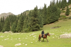 jeździec na koniu czyli kirgiski obrazem zwyczajny