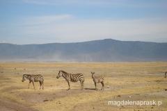 Tanzania - w kraterze Ngorongoro