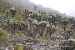 Tanzania - w drodze na Kilimandżaro