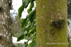 Ekwador - roślinność ekwadorskiej dżungli