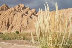 Chile - Pustynia Atakama
