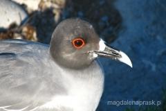 Ekwador - Galapagos