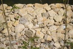 brzeg Dunaju to ulubione miejsce węży - widzieliśmy ich tu kilkadziesiąt