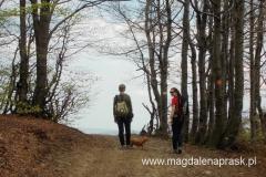 wyjście z lasu już na Halę Łabowską