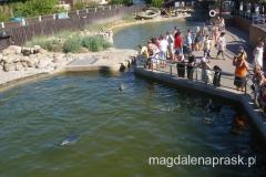 foki w helskim fokarium