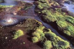 Islandia - błotne jeziorko