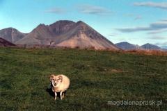 Jedyna odważna owca