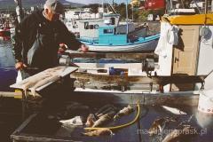 W porcie - świeże ryby
