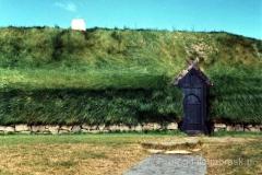 włochata farma na Islandii - częsty widok