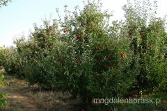 okolice Jeziora Prespańskiego to zagłębie jabłkowe