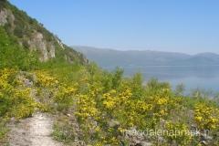 szlak prowadzi brzegiem jeziora przez takie żółte tereny