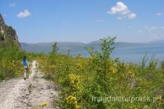 szlak prowadzi brzegiem jeziora przez takie żółte krzaki