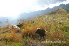 na szczycie wzgórza z flagą (na które wcale nie było tak łatwo wejść: brak ścieżki, stromo) zastaliśmy wylegujące się krowy