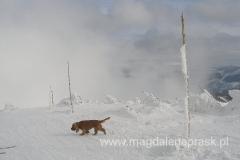 poza narciarzami, na szlaku spotykamy też psy