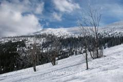 ponad obszarem lasu - otwierają się piękne widoki na góry ponad nami