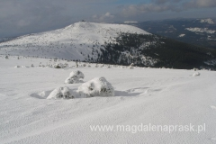 szczyt Szrenica 1.362m npm