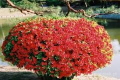 kwiatowy klombik w iście japońskim stylu
