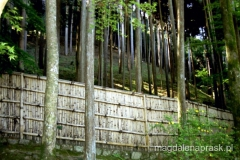 japoński las ogrodzony bambusowym płotem