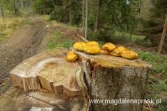 o tej porze roku lasy obfitują w różnego rodzaju grzyby