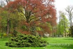 piękna wiosna w Parku Zdrojowym