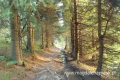 czerwonym szlakiem przez las