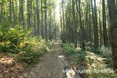 szlakiem przez las