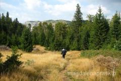 ostatnie metry szlaku prowadzą przez las