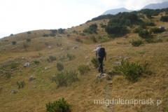 początkowo szlak prowadzi takimi słabo zarośniętymi łąkami