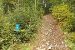 niebieskim szlakiem schodzimy w dół do Jurkowa