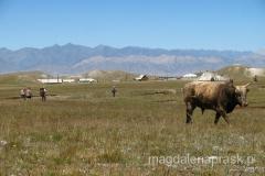Achik Tasch - czyli polana, na której stawia się bazę - tu wspinacze i krowy czują się równie swobodnie