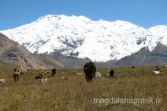 wysokogórskie pastwisko dla krów
