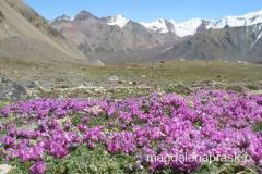 piękne góry Pamiru