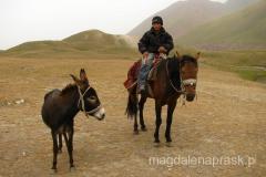 kirgiscy chłopcy niemal rodzą się w siodle...