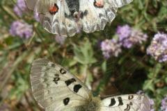 trzy przepiekne motyle złapane w pajęczą sieć