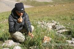 Ługowa Polana swą nazwę zawdzięcza quazi cebuli, która obficie tu rośnie (zielone badyle przypominają szczypiorek i tak też były przez nas zjadane po dodaniu do sałatki czy kanapki)