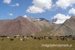 pastwisko u stóp gór Pamiru