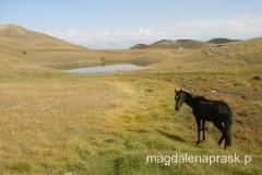spacerując po okolicy najczęściej spotykaliśmy wolno pasące się konie