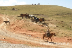 konie to niemal symbol Kirgistanu