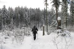 nasz szlak prowadzi głównie przez zasypany śniegiem las - pięknie