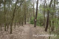 jadąc przez las