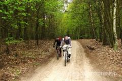 jadąc przez lasy Wielkopolskiego Parku Narodowego