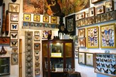 w domu można podziwiać eksponaty przywiezione z Ameryki Północnej i Południowej, Afryki i Azji