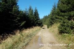szlak miejscami błotnisty