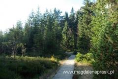 na szlaku są momenty gdy idzie się niby przez zwykły las