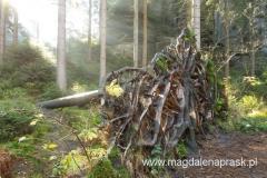 wielkie drzewo upadło