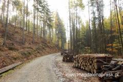 najpierw maszerujemy drogą - szlakiem rowerowym przez las