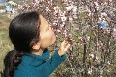 nareszcie wiosna