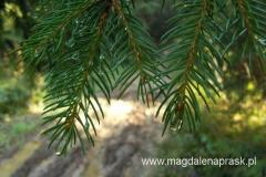 ranek wita dużą ilością wilgoci skroploną n drzewach i trawie