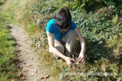 o tej porze roku w Beskidach jest dużo jeżyn i jagód